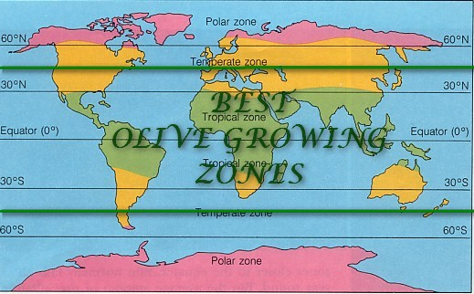 Ideal areas for Olive Fruit production